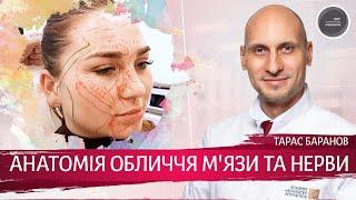 Анатомия Лица для Косметологов ► Мышцы и нервы