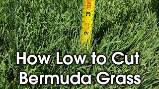 How Tall to Cut Bermuda - How Short to Cut Lawn