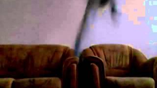 Обучение орабскава сальта в  домашних условиях