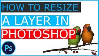 How To Resize A Layer In Photoshop - Photoshop Tutorial Bangla
