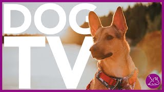 15 HOUR DOG TV  EXTREMELY ENTERTAINING VIDEO FOR DOGS!