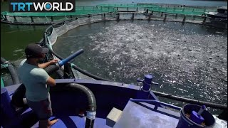 Salmon Success: Turkey makes splash with salmon exports