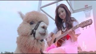 Repeat youtube video 全民寶貝Kimberley陳芳語《分手說愛你》 Official MV (HD)