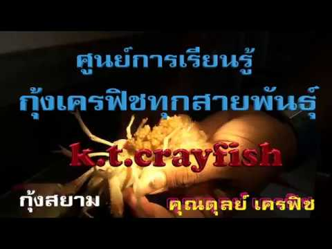k t crayfish ศูนย์เรียนรู้กุ้งเครฟิช ทุกสายพันธุ์ จ.ระยอง