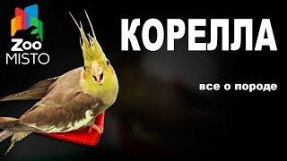 Корелла - Все о виде попугаев | Попугай вида - Корелла