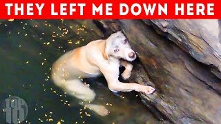 9 Most Inspiring Animal Rescues