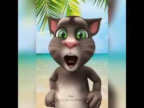 Gato tom cantando Gonzales