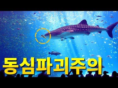 수족관의 상어는 사냥을 하지 않는걸까?? 물고기들이 없어지는 이유!!