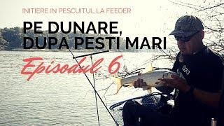 La feeder pe Dunare,  dupa peste mediu si mare