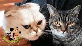 Аномалии у кошек, два случая из практики (страшных кадров нет)