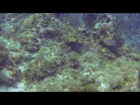 Jamaica 2014 - The L-Reef Part 2