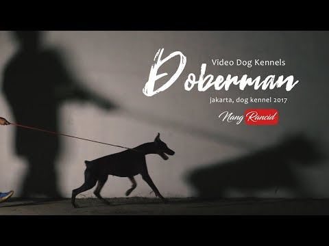 Doberman, Dog Kennels Jakarta