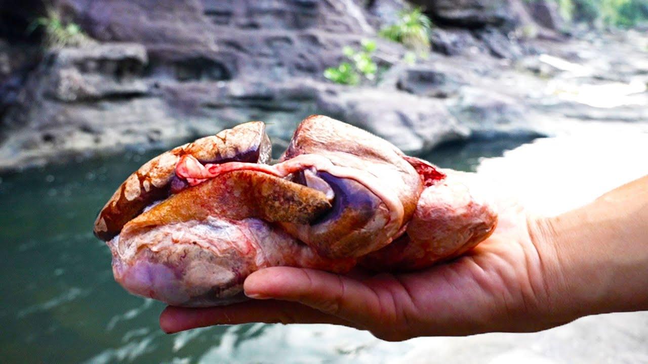 猪の〇玉を餌に離島の穴場でオオウナギを狙う【西表遠征#4話】