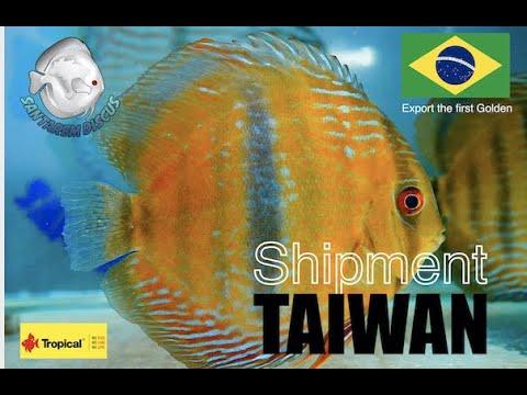 Golden Shipment Taiwan
