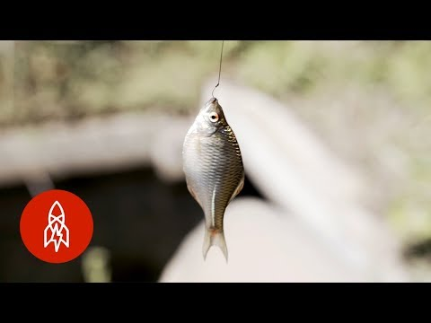 Catching Tiny Fish With Tiny Rods
