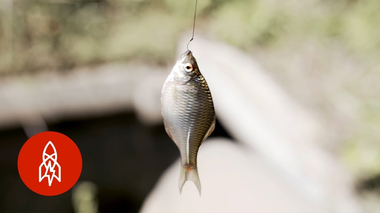 Small fish dating site