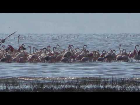 Karibu Kenya:Lake Nakuru