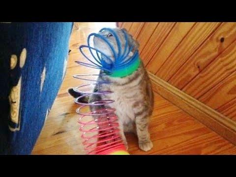FUNNIEST retro ANIMAL VIDEOS - Prepare yourself to LAUGH HARD!