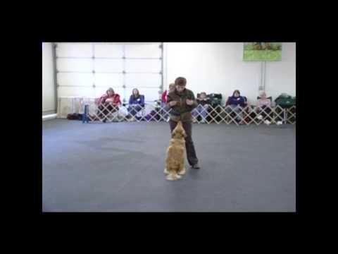 Janice Gunn's Puppy/Novice/Handling & Open/Utility DVD Clip – DTA346