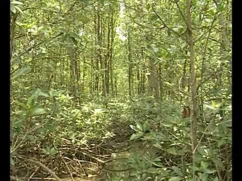 Hệ sinh thái rừng ngập mặn Cần Giờ-2/3-ST