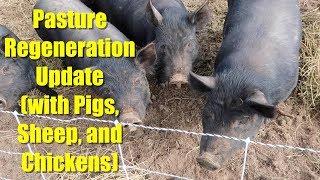 Pasture Pig Regeneration Update