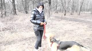 Как научить собаку откликаться на прогулке