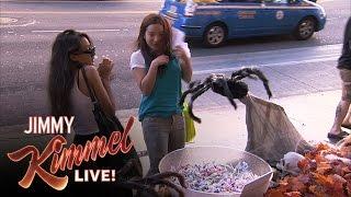 Halloween Candy Spider Prank