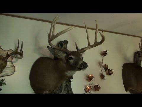 Deer Mounts 2012