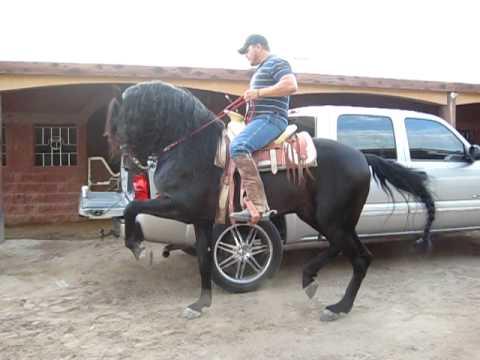 Lili Osuna.- caballo MAXIMO.-