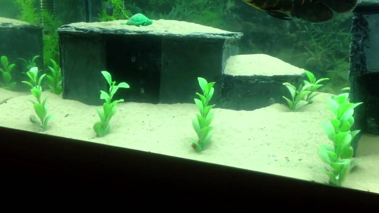 home made slate caves for aquarium youtube