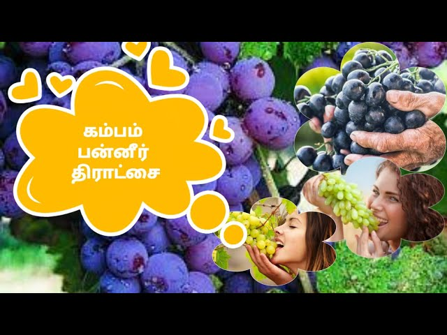 Cumbum Grape Valley Tour
