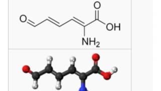「2-アミノムコン酸セミアルデヒド」とは ウィキ動画