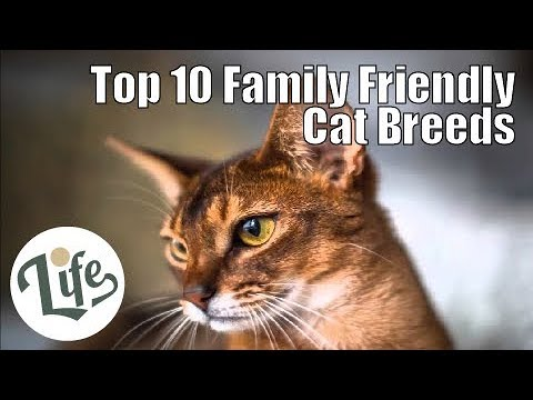 Top 10 Family Friendly Cat Breeds Perfect for Children