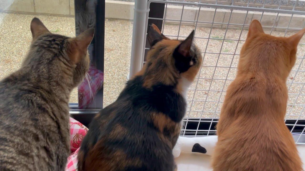 通りすがりの野良猫のおかげで初めて3匹並んでる姿をみれました。