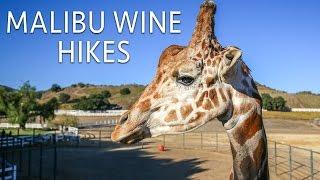 Malibu Wine Hikes with Stanley the Giraffe in Saddlerock Ranch