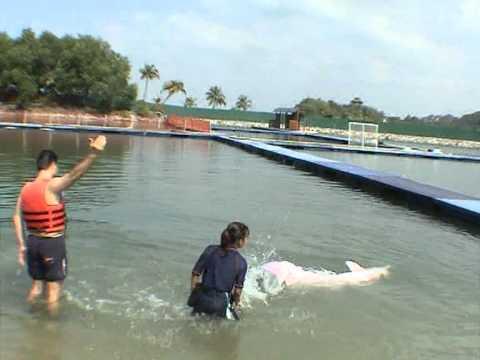 Κολυμπώντας με Jumbo και Han-δελφίνια Swimming with Jumbo and Han-dolphins