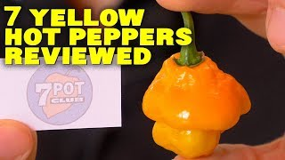 steps to transplant peppers