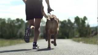 Dog Training - Motivation - Pro Plan P5 Training