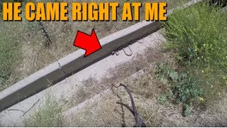 THE SNAKE CAME RIGHT AT ME!!!