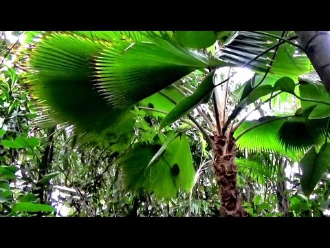 Tropical Plants ,Stream and Fish Video RELAX