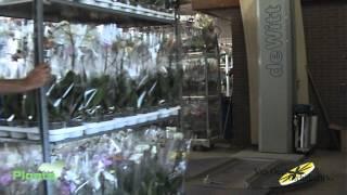 NorthPlants - Kwekerij Van Geel Orchideeën