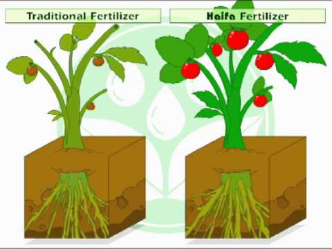 Foliar Feeding - how does it work?