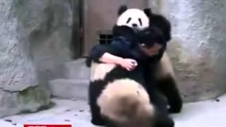 очень смешное видео)) это надо видеть)) Panda))
