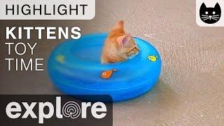 Kitten Cabana Kitten Relaxing In Toy - Live Cam Highlight 04/25/17