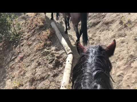Yellowstone / Shoshone National Forest Wilderness Elk Hunt 32 mile horseback ride into camp.