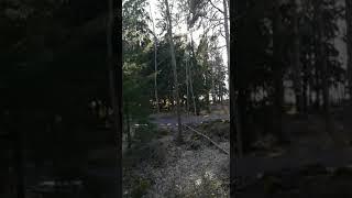 Финляндия, Вааса, природа.