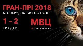 Международная выставка кошек. Киев, 2018 / video with cats for relaxation
