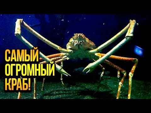 ООО Лебедяньмолоко