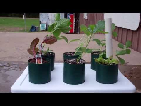 How To Plant! The Incredible Self Watering Pop Bottle Garden Grow System!