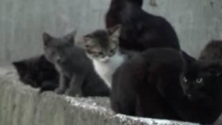 Семейство Городских Котов